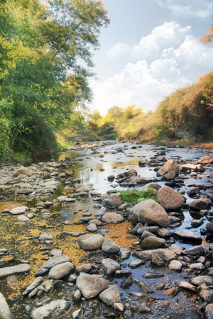 View of a beautiful place filled with acacia trees and a river stream. photo