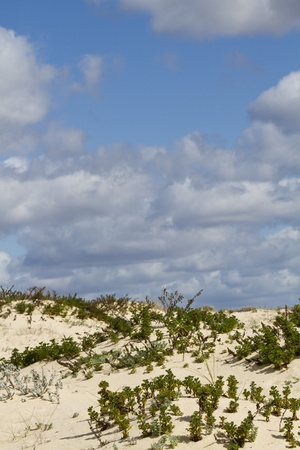View of a beautiful landscape dune flora in Portugal, Europe. Stock Photo - 12979019