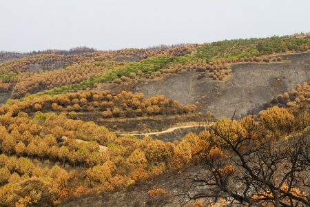 Desolate view of the remains of a forest after a fire. photo