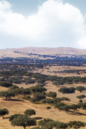 View of a typical Alentejo dry landscape located in Portugal. Stock Photo - 15273751