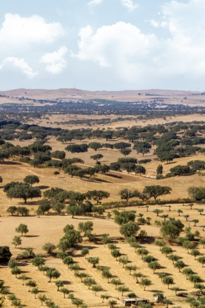 View of a typical Alentejo dry landscape located in Portugal. Stock Photo - 15507338