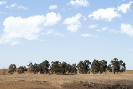 View of a typical Alentejo dry landscape located in Portugal. Stock Photo - 15507325