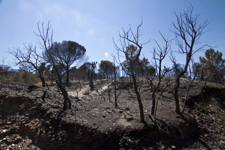 Landscape view of a burned forest, victim of a recent fire. Stock Photo - 15303081
