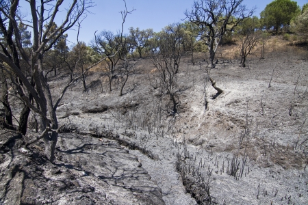 Landscape view of a burned forest, victim of a recent fire. Stock Photo - 15303418