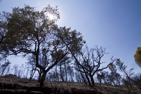 Landscape view of a burned forest, victim of a recent fire. Stock Photo - 15303098