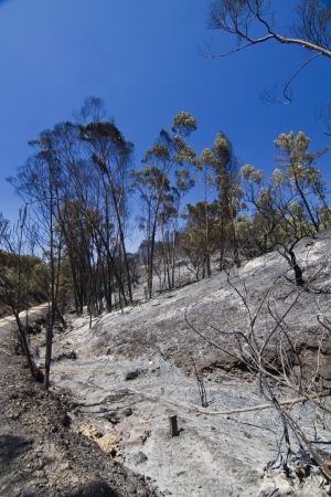 Landscape view of a burned forest, victim of a recent fire. photo