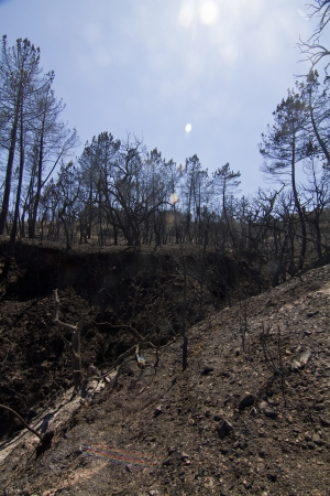Landscape view of a burned forest, victim of a recent fire. Stock Photo - 15303186