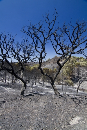 Landscape view of a burned forest, victim of a recent fire. Stock Photo - 15303204