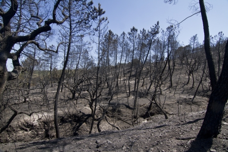 Paisaje vista de un bosque quemado, v�ctima de un incendio reciente. photo