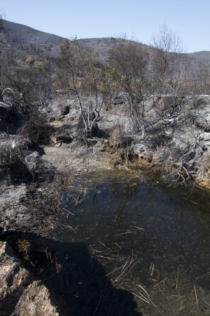 Landscape view of a burned forest, victim of a recent fire. Stock Photo - 15303187
