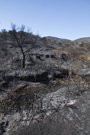 Landscape view of a burned forest, victim of a recent fire. Stock Photo - 15303188