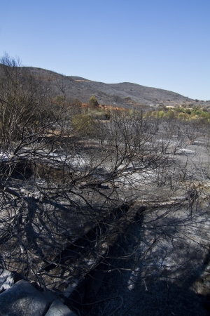 Landscape view of a burned forest, victim of a recent fire. Stock Photo - 15303091