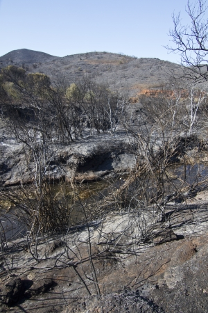 Landscape view of a burned forest, victim of a recent fire. Stock Photo - 15302975