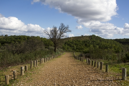 Landscape view of a dirt road on the countryside of Alentejo. Stock Photo - 17428629