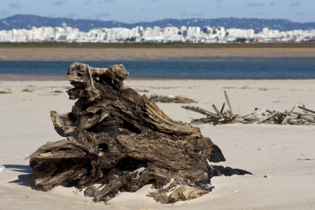 ria: View of an abandoned tree stump on the beach.
