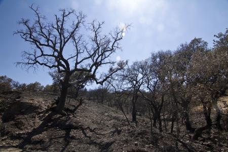 devastation: Landscape view of a burned forest, victim of a recent fire.