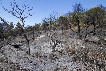 Landscape view of a burned forest, victim of a recent fire.