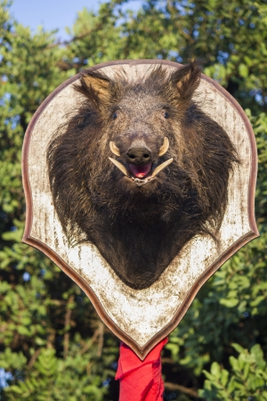 View of a stuffed wild boar head on a pole (taxidermy). photo