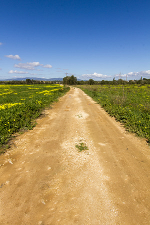 pes caprae: Beautiful view of dirt road with yellow Oxalis pes-caprae flowers on the side, on Lagoa, Portugal.