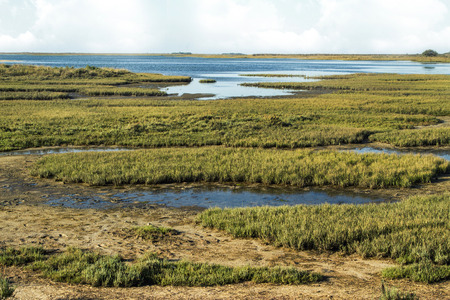 ria: Beautiful view of the famous natural Ria Formosa marshlands located in Faro, Portugal.