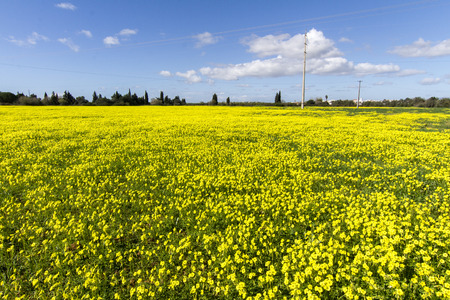 Beautiful view of a spring countryside landscape of yellow Oxalis pes-caprae flowers on Lagoa, Portugal. photo