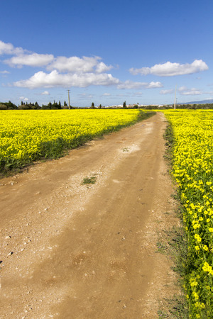 Beautiful view of dirt road with yellow Oxalis pes-caprae flowers on the side, on Lagoa, Portugal. photo