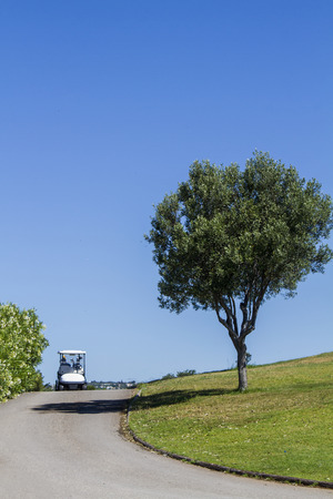 cart road: Road with golf cart car and a lonely tree on a golf course.