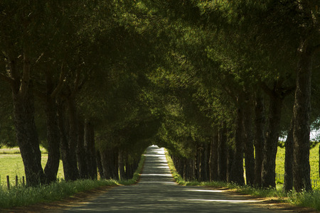 View of a long asphalt road with trees creating a tunnel effect. photo