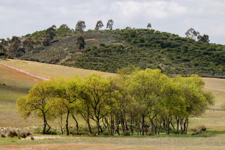 sparse: View  of the typical Alentejo countryside landscape with sparse tree clusters in Portugal. Stock Photo