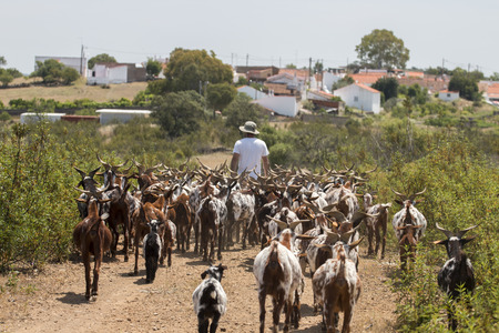 View of a herd of goats in a pasture in the countryside. Stock Photo
