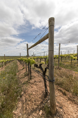 portugal agriculture: Landscape view of a vineyard located in the Alentejo region, Portugal. Stock Photo