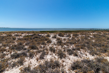 formosa: Vegetation on the sand dunes of Ria Formosa marshlands located in the Algarve, Portugal.