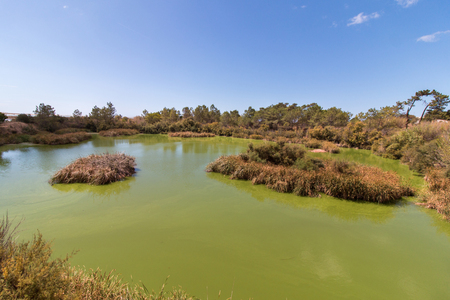 birdwatching: Wide view of a lake for birdwatching in the Ria Formosa marshlands, Portugal. Stock Photo