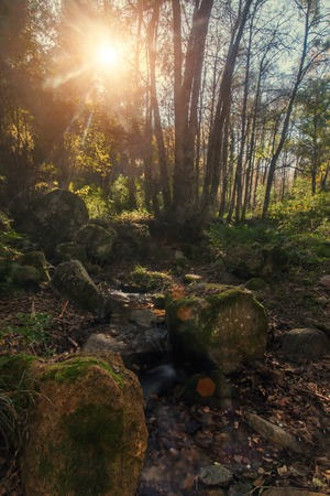 monchique: Beautiful forest mountain region in autumn season located on Monchique, Portugal.