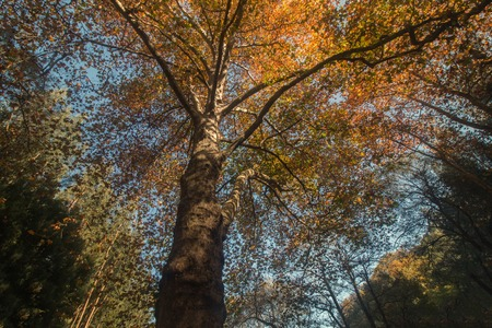 monchique: Beautiful autumn forest with tall tree in Monchique region, Portugal