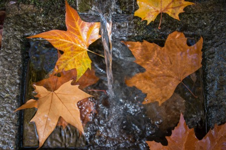 drinkable: River source headwaters in autumn in the Monchique mountain region, Portugal.