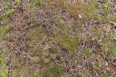 tough: High mountain vegetation with tiny grass with tough roots.