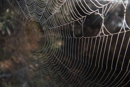 Intricate spider web in nature in the early morning.