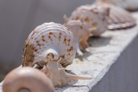 Several seashells aligned on a wall