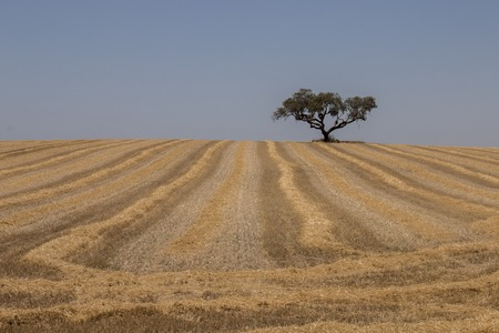 Typical autumn landscape in the Alentejo region, Portugal.