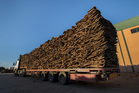 on duty: View of a bunch of raw cork planks stacked on a heavy duty truck.