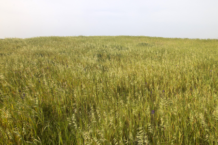 Landscape view of a field of Mediterranean native vegetation.