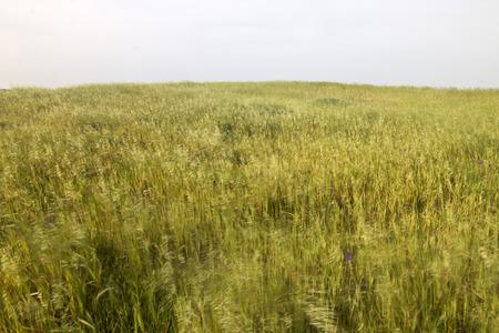 Landscape view of a field of Mediterranean native vegetation.