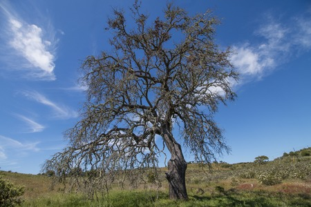 View of a lonely dead tree on the countryside.