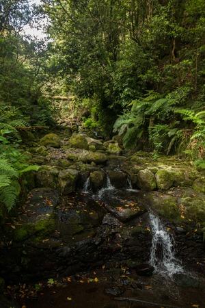 Levada of Caldeirao Verde, famous hiking trail on Madeira island, Portugal.