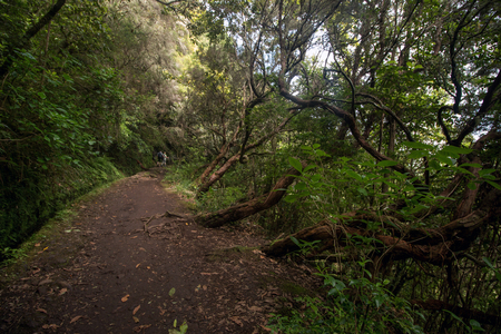 Levada of Caldeirao Verde, famous hiking trail on Madeira island, Portugal.