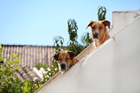 View of two dogs peaking on the balcony.