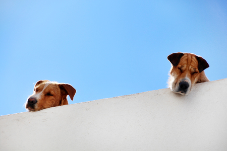 View of two dogs sleeping on the balcony. Stock Photo