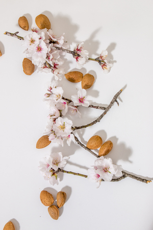 almond tree branch with almonds isolated on a white background. 版權商用圖片 - 96786995