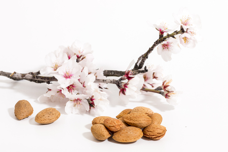 almond tree branch with almonds isolated on a white background.